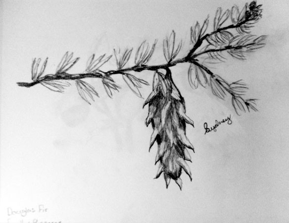 Student Spotlight: Botany Studies Through Drawing, by Sydney