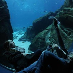 Aquarium School